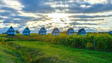 Vineyard Villa cottages nestled in a vineyard